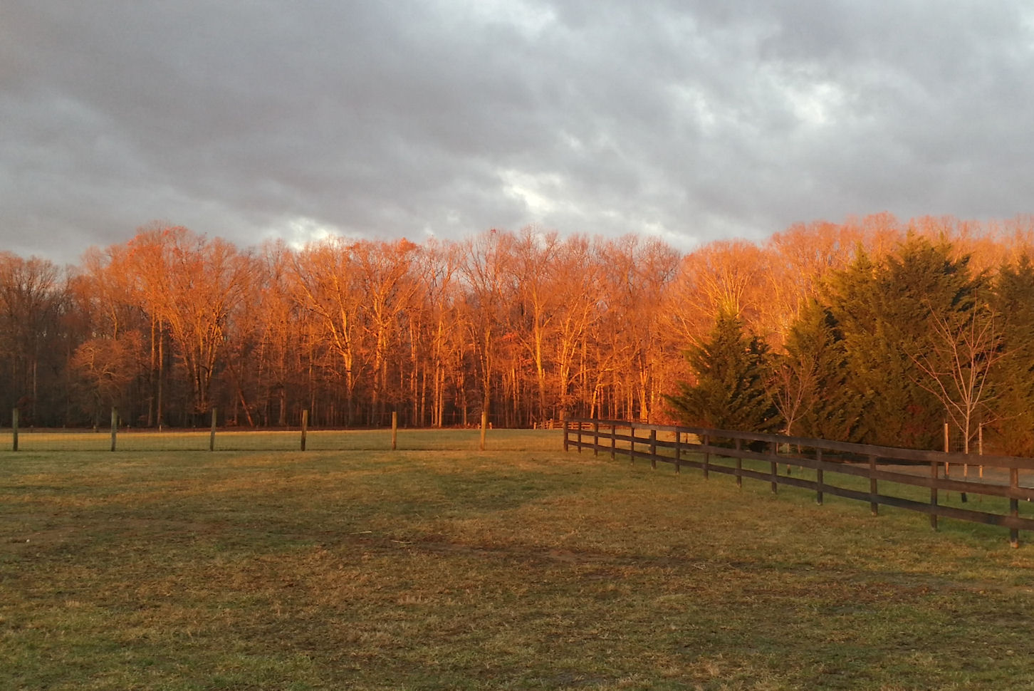 Treeline in the fall