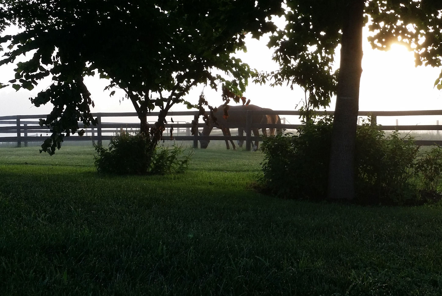 Horse grazing on a summer morning